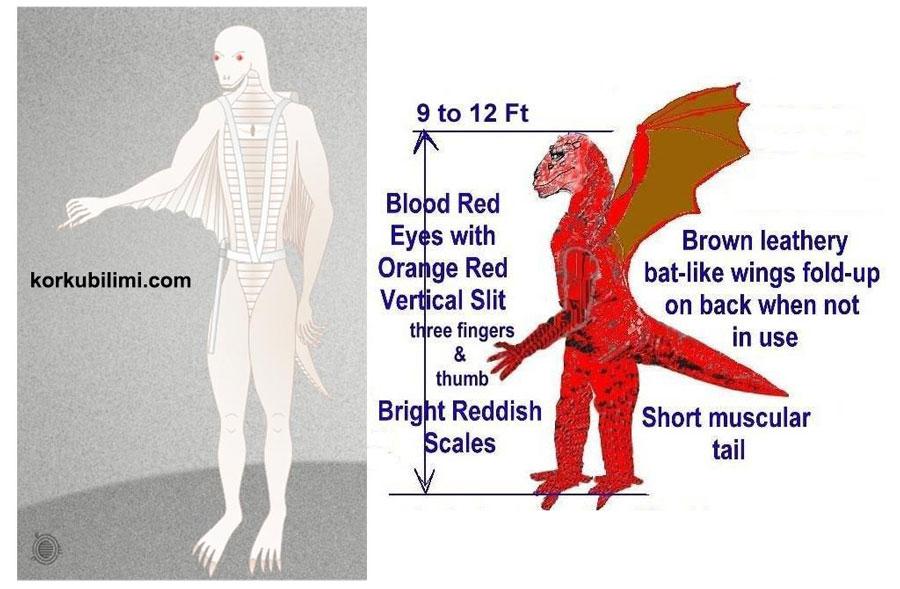 Reptilian Blood Type