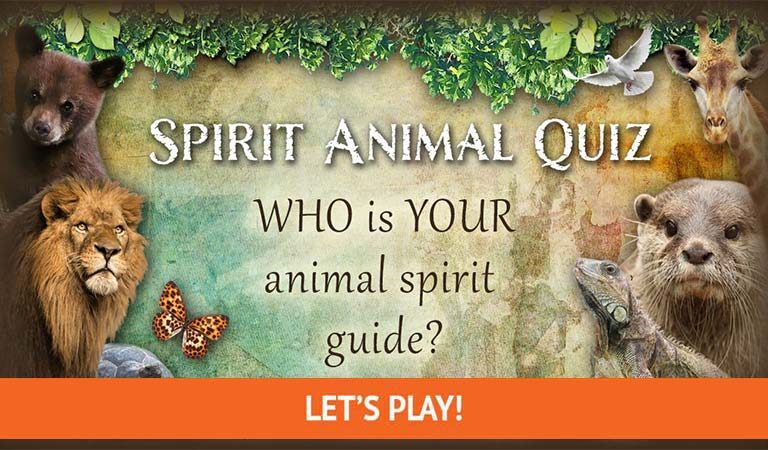 QUIZ: What Is Your Spirit Animal?