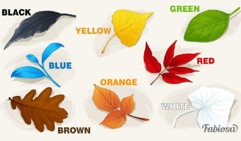 It Is All About Color(TEST): Eight Autumn Leaves That Help People Understand Their Personality Better