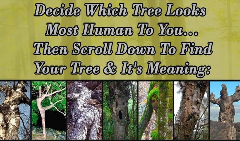Psychological Personality Quiz: Choose Which Tree Looks Most Human To You